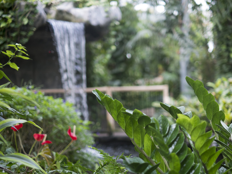 Waterfall at Cambridge Butterfly Conservatory
