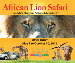 African Lion Safari – Big Box
