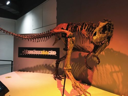 Tyrannosaur fossil - Family Activities in Waterloo Region