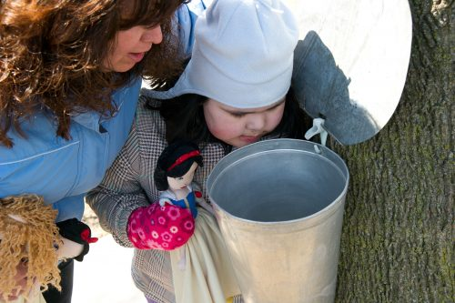 Tapping of Maple Syrup - Family Activities in Waterloo Region