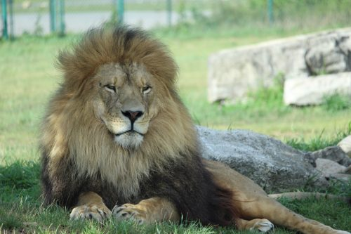 Experience the WILD at African Lion Safari This Summer