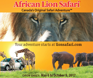 African Lion Safari – SEPT 2017