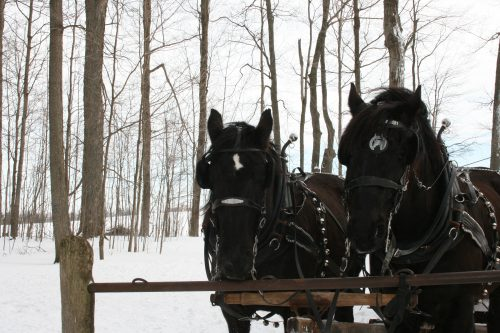St. Jacobs Horse Drawn Tours Explore Waterloo Region