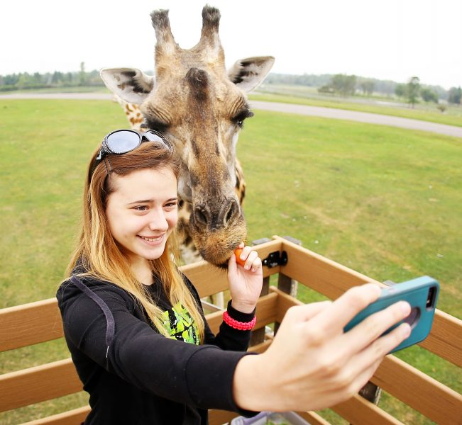 woman taking a selfie with a giraffe at African Lion Safari's Wake Up the Wild
