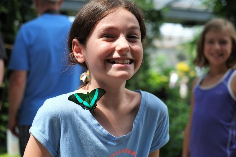 Cambridge Butterfly Conservatory, things to do in Waterloo Region