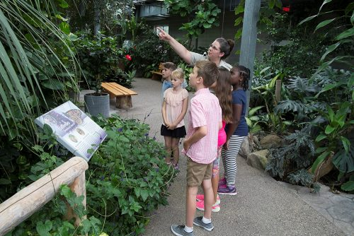 children touring through Cambridge Butterfly Conservatory