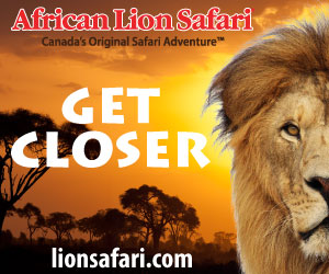 African Lion Safari – September 2018