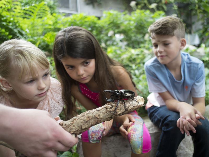 Kids looking at bugs - Cambridge Butterfly Conservatory