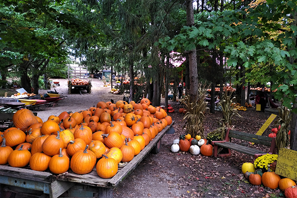 Pumpkin Patches and Corn Mazes in Waterloo Region