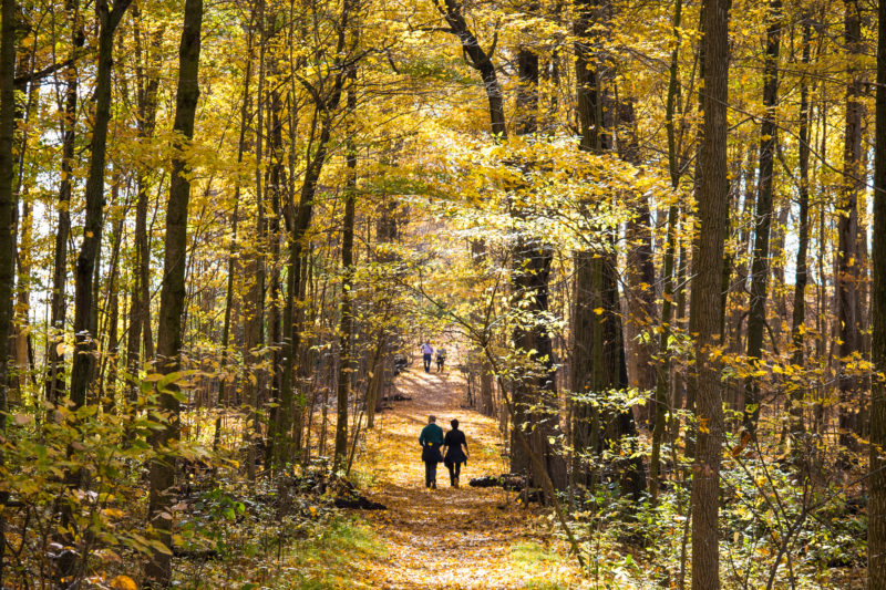 two people walking along a path, surrounded by trees in the fall, at rare Charitable Research Reserve