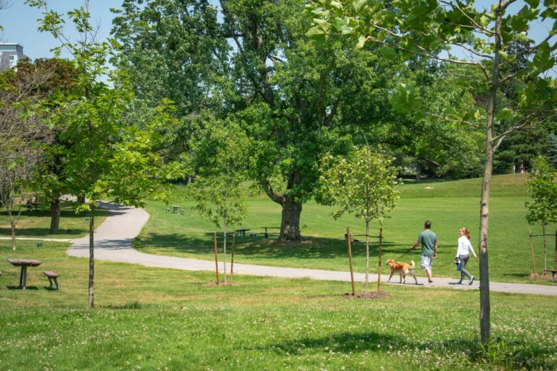 a man and a woman walking a dog along a trail through Waterloo Park on a beautiful summer's day