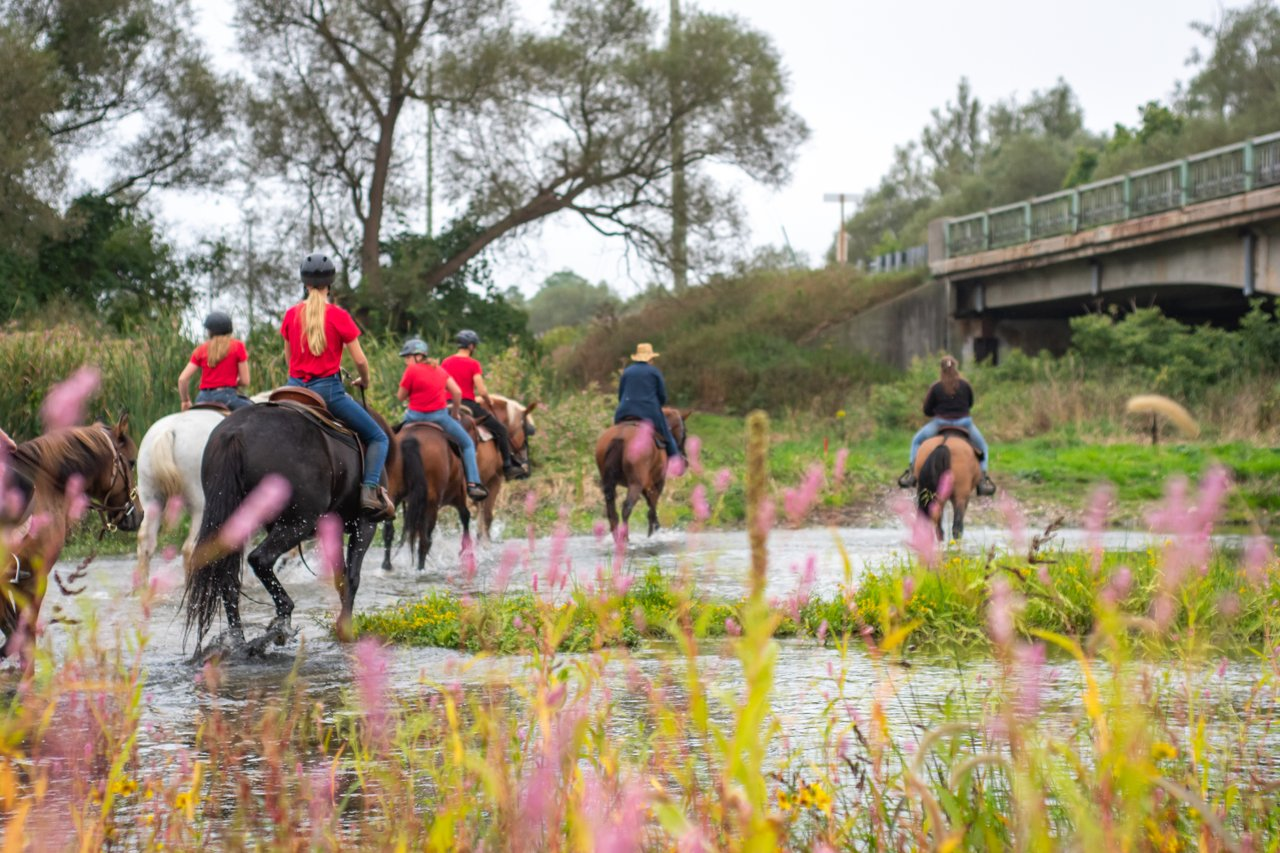 several horses and riders going through a shallow river stream on an overcast day on a Conestogo River Horseback Adventures tour