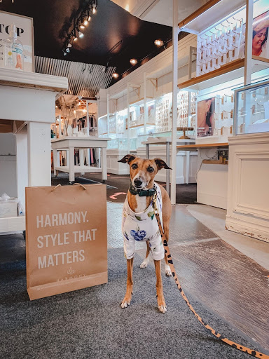 Willa, a whippet breed of dog, inside the jewellery store Harmony in Uptown Waterloo