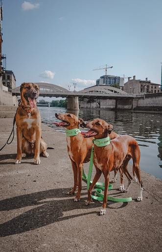 three dogs, one sitting and two standing, along the mill race area beside the Grand River in downtown Camgridge - Galt