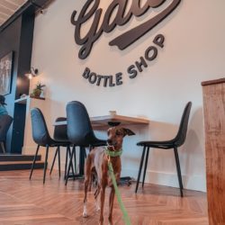a whippet dog standing inside the Old Galt Bottle Shop in Cambridge, by a wall that has the businesses name on it, and a small table and chairs against the wall