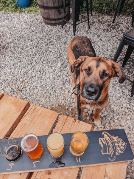 Marshall, a large mixed breed dog, on the patio at Rural Roots Brewing in Elimra