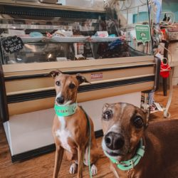 two whippets lookig into the camera and standing inside the Spoil the Dog Bakery in St. Jacobs