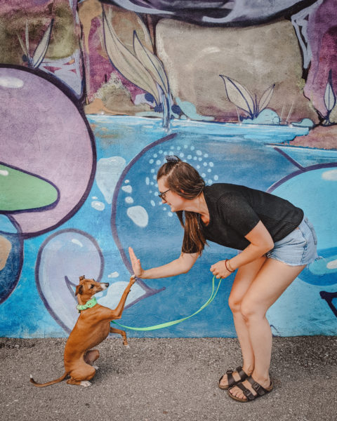 a woman and her dog high-fiving in front of a colourful wall mural in downtown Kitchener