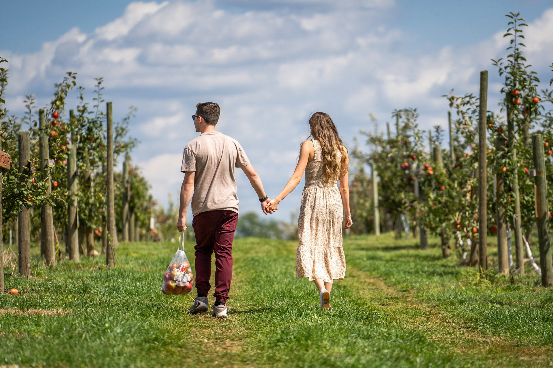a male and a female holding hands and walking through an apple orchard after picking some apples in the fall on a sunny day