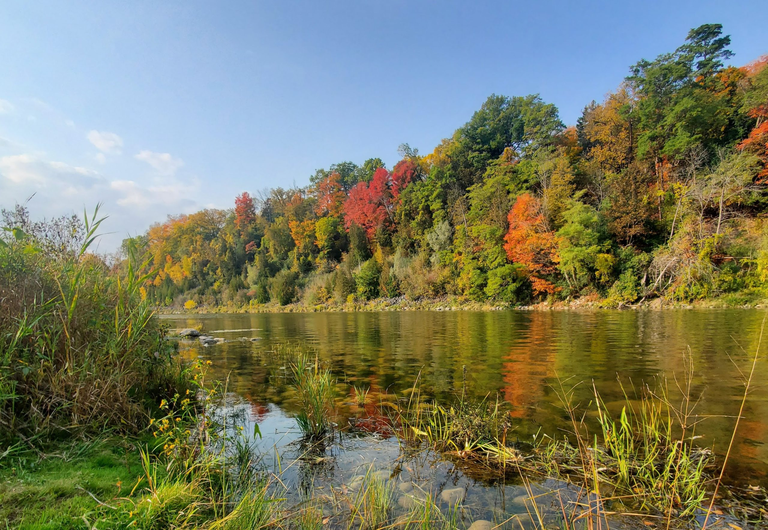 a view of the Grand River and the trees lining its banks; the leaves on the trees are beginning to change colour, and it's a sunny fall day